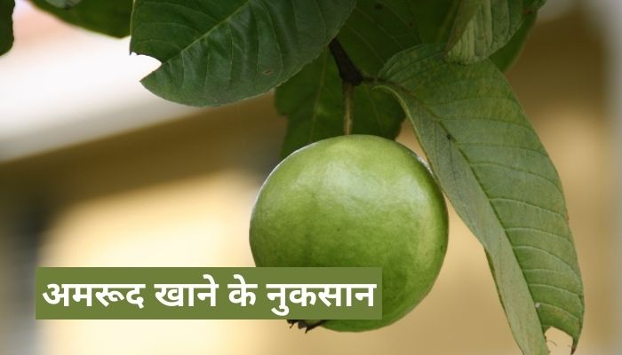 अमरूद खाने के नुकसान   Guava Side Effects In Hindi