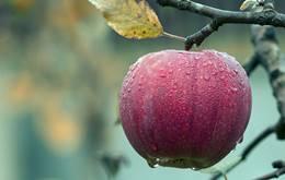 एक सेब में कितनी कैलोरी होती हैं | 1 apple mein kitni calorie hoti hai