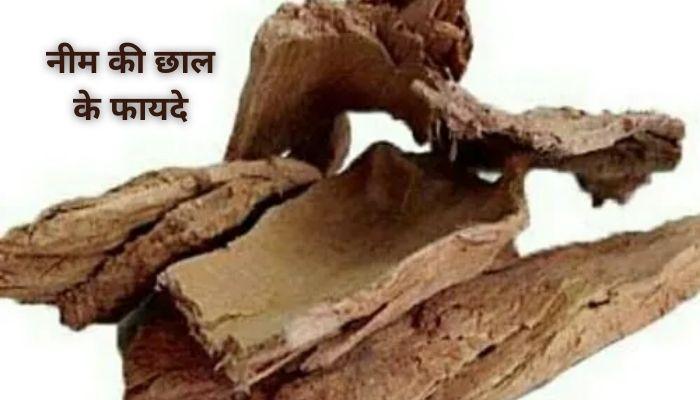 नीम की छाल के फायदे | Benefits of Neem Bark In Hindi