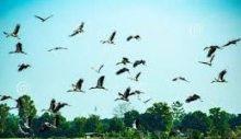 पक्षी