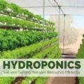 Hydroponic Farming Business