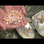 Pearl Farming Business
